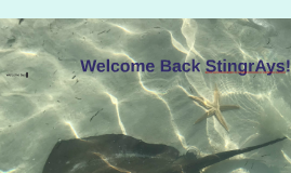 Welcome Back Stingr A ys!