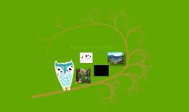 Bosque templado