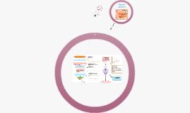 Copy of Manual de procesos  y procedimientos