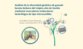 Análisis de la diversidad genética de ganado bovino lechero del trópico alto de Nariño mediante marcadores moleculares