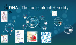 DNA - The molecule of Heridity