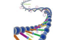 RNA regulador