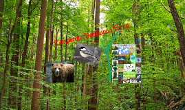 Copy of The Temperate Deciduous Forest
