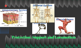 Protection, Support and Locomotion