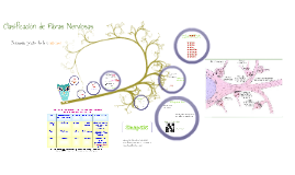 Copy of fibras nerviosas