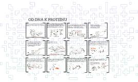 Od DNA k proteinu