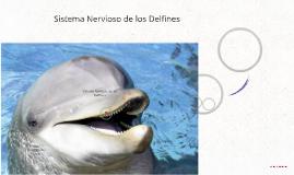 Sistema Nervioso de los Delfines