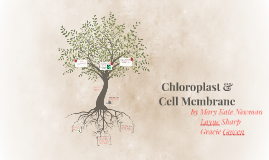 Chloroplast & Cell Membrane