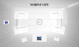 6° page 106 unit 8 marine life