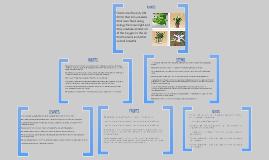 III.A.9 Multimedia Presentation