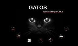 FELINOS (GATOS)