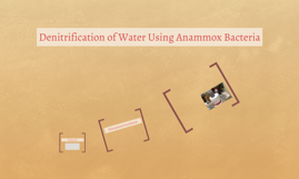 Denitrification of Water Using Anammox Bacteria