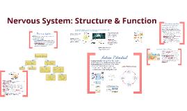 Copy of BI 4: Nervous System