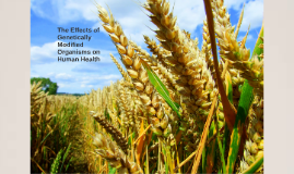 The Effects Genetically Modified Organisms on Human Health