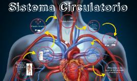 Componentes generales del sistema circulatorio