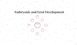 Embryonic and Fetal Devlopment