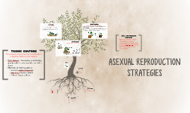 Copy of Copy of ASEXUAL REPRODUCTION STRATEGIES