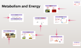 Metabolism and Energy (ATP)