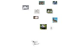 Tipos de Razas de Conejos (principales razas, características generales, productos derivados y producción)