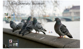 Copy of Urban Avifauna Diversity: Brooklyn