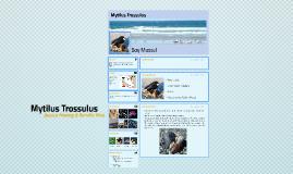 Mytilus Trossulus