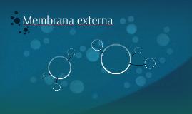Membrana externa