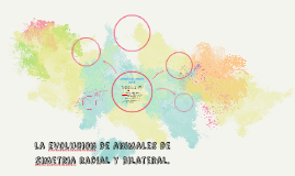 Copy of la evolucion de animales de simetria radial y bilateral.