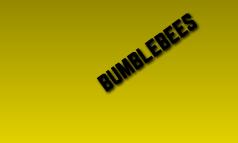 Lifecycle Of Bumblebee