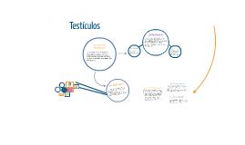 Copy of Copy of Copy of Copy of Testículo