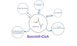 Copy of Succinil - CoA