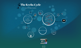 Copy of The Krebs Cycle