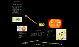 A Nap (bemutató)