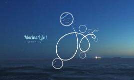 Marine Life !
