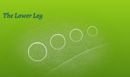 The Lower Leg