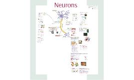 Bio- Communication 4: Neurons