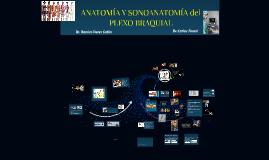 ANATOMÍA Y SONOANATOMÍA DE MIEMBRO SUPERIOR