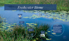 Freshwater Biome - Everyone needs Freshwater!