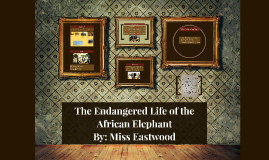 The Endangered Life of the African Elephant