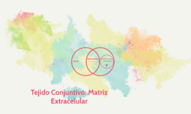 Tejido Conjuntivo: Matriz Extracelular
