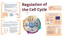 Copy of BI 3: Control of Cell Cycle
