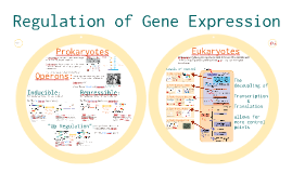 Copy of  Molecular Genetics 3: Regulation of Gene Expression