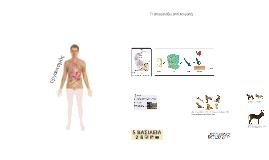οργάνωση των πολυκύτταρων οργανισμών