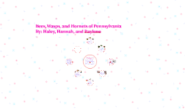 Bees, Wasps, and Hornets of Pennsylvania