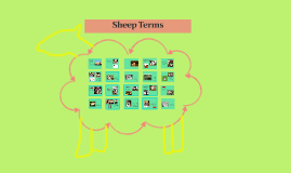 Sheep Terms