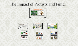 The Impacts of Protists and Fungi