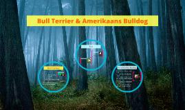 Bull Terrier & Amerikaans Bulldog