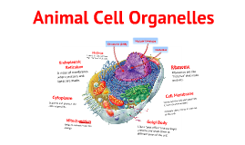 Copy of Animal Cell Organelles