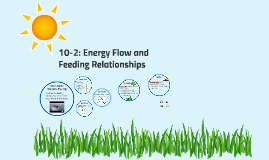 10-2 CP: Energy Flow and Feeding Relationships