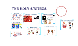 Copy of THE BODY SYSTEMS