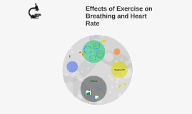 Effects of Exercise on Breathing and Heart Rate